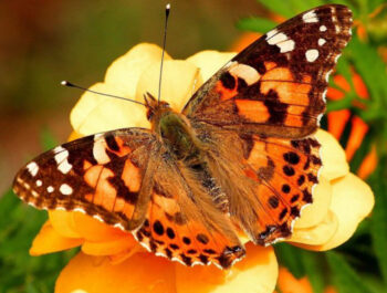 Do you want to know who lives in a silk house? Raise butterflies with us!