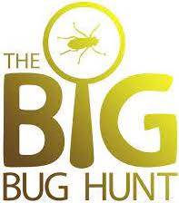 2021 ASE Great Bug Hunt!
