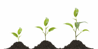 In what conditions do plants grow best?