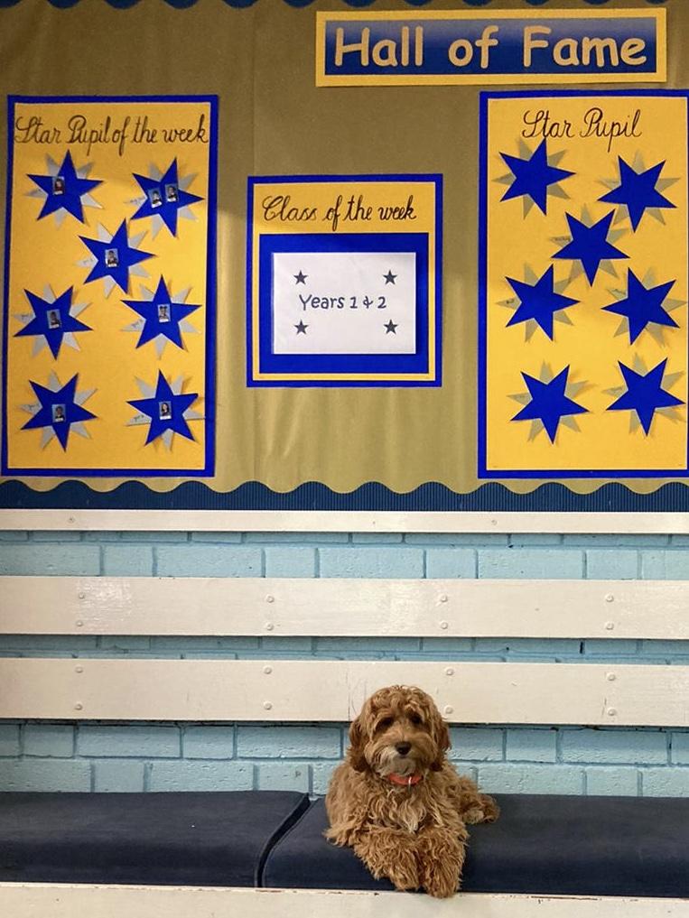 Saffy – Our School Dog