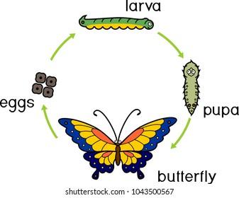Our Butterfly Garden